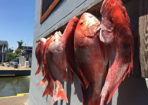 Fishing Galveston Texas